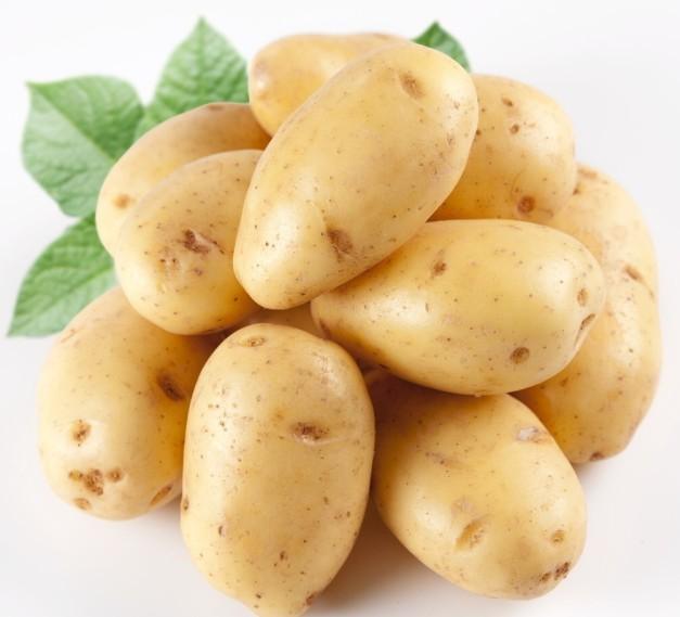 马铃薯病毒病试验报告