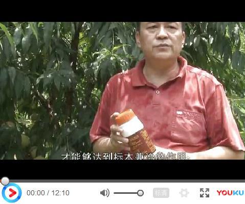 广东鹰嘴蜜桃叶片穿孔、果实腐烂、树干流胶、营养复壮