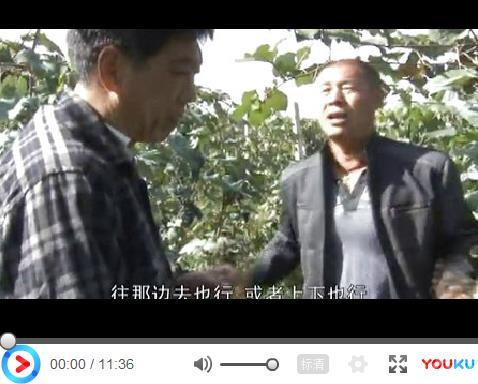 柳河县冰葡萄扇叶病毒病治疗效果