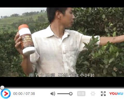 湖南省永春县面临淘汰的冰糖橙果园防治溃疡病用药效果