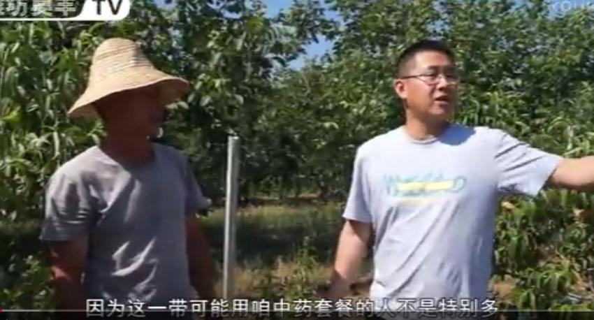 桃树穿孔病防治办法与靓果安、大蒜油用药效果(北京平谷区)