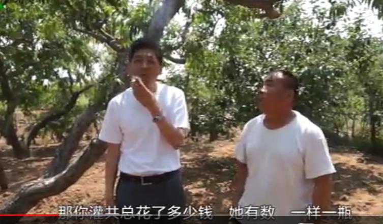 针对桃树早期落叶、流胶灌根扭转树势效果展示(山东青州)