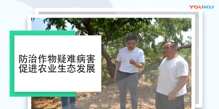 云南昭通苹果银叶病、黑点病、腐烂病、轮纹病等使用中草药制剂防治效果与苹果综合管理中的一点建议