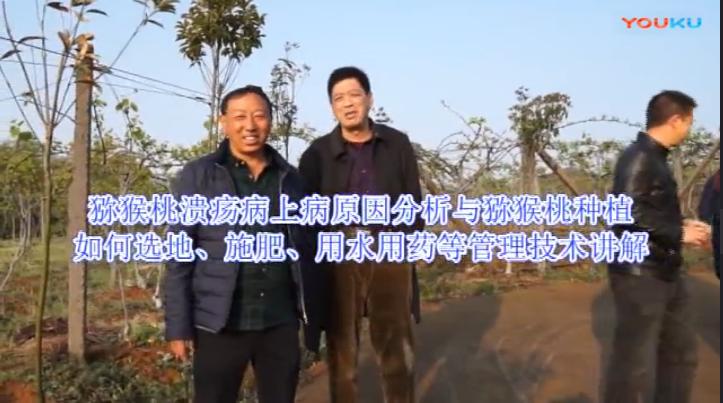 猕猴桃溃疡病上病原因分析与猕猴桃种植如何选地、施肥、用水用药等管理技术讲解(贵州黔西南州兴义市)