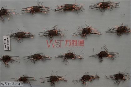 WST13-14B