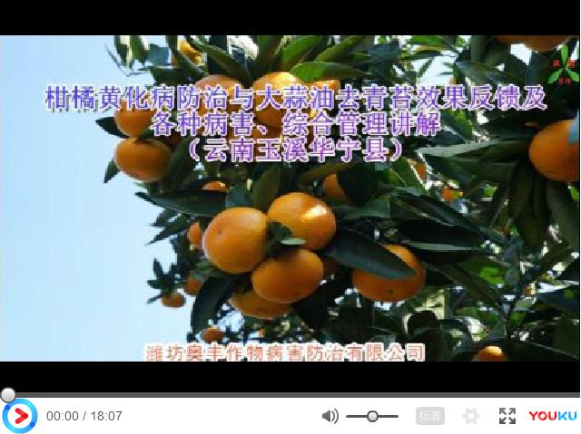 【视频】柑橘黄化病防治与大蒜油去青苔效果反馈及各种病害、综合管理讲解(云南玉溪华宁县)