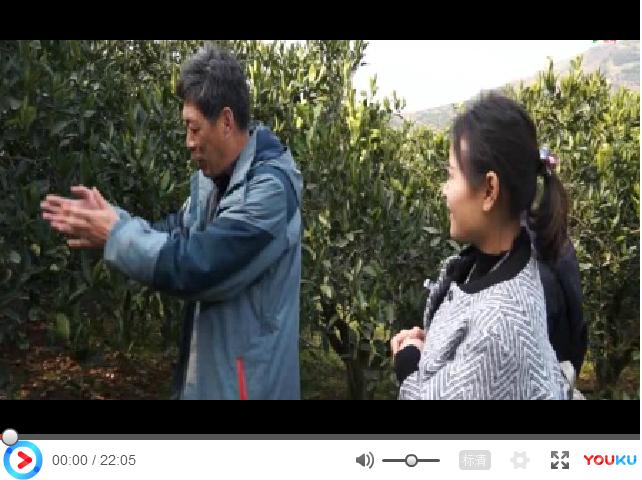 【视频】奉节脐橙多种病害防治方案讲解——奥丰向奉节村淘小二讲解脐橙用药(重庆奉节)