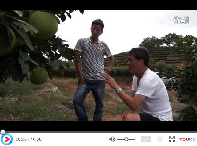 【视频】蜜柚灌根效果展示及溃疡病防治方案讲解(福建宁德霞浦县)