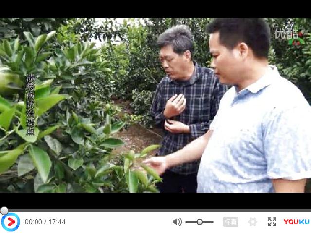 【视频】柑橘、脐橙病害用药效果展示及防治方案讲解(广西贺州富川县)