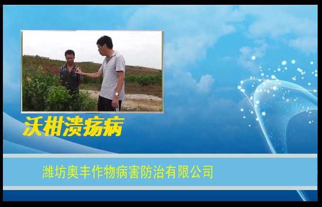 【视频】沃柑溃疡病防治方案讲解--广西武鸣县
