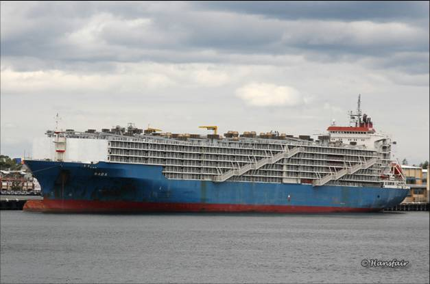 集装箱船改牲畜船