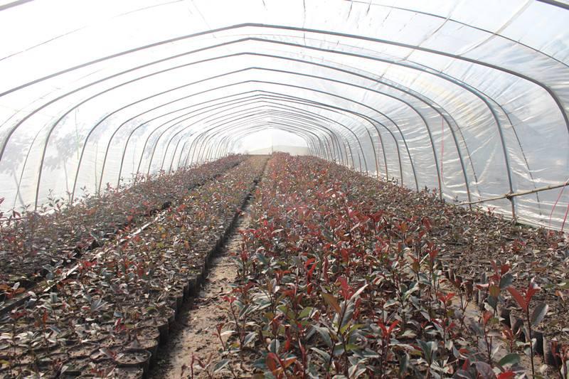 農業項目二